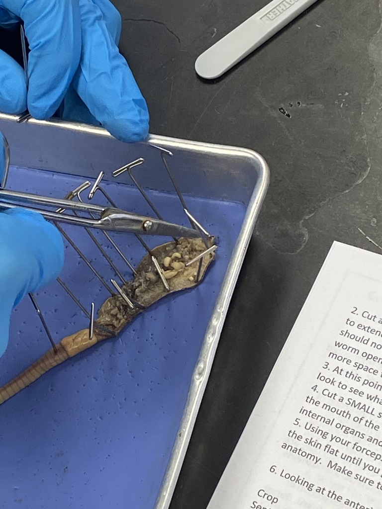 Marine Biology Dissections